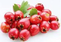 Плоды боярышника: полезные свойства и противопоказания, отзывы.
